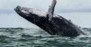Човек, погълнат от кит, оцелява подобно на библейския Йона